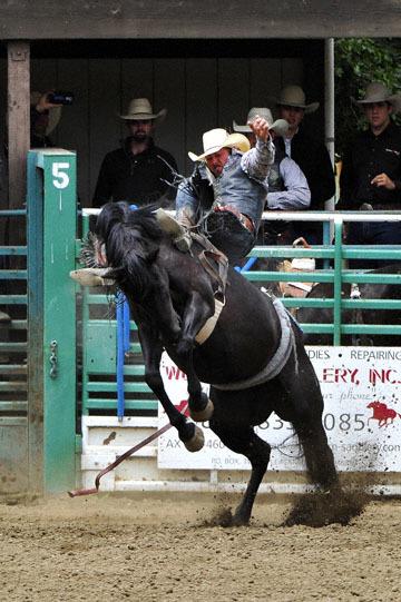 blog (4x6@300) Yoko 83 Rowell Ranch Rodeo, Bareback Bronco 3_DSC9710-5.21.16.(1).jpg