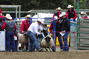 blog 83 Rowell Ranch Rodeo, Mutton Busting 1_DSC9572-5.21.16.(1).jpg