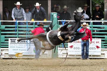 blog 84 Rowell Ranch Rodeo, Bareback Bronco 3, Tucker Zingg (NS Montana