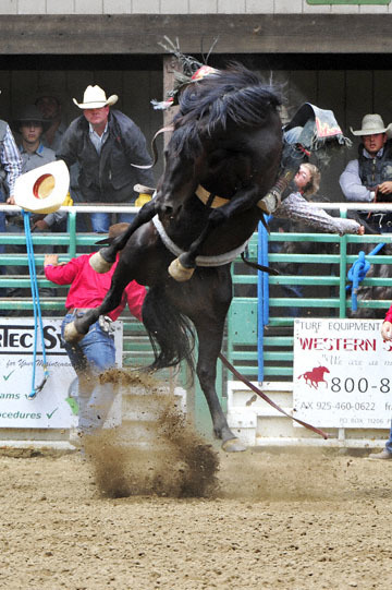 blog 84 Rowell Ranch Rodeo, Bareback Bronco 3, Tucker Zingg (NS Montana