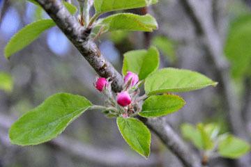 blog 30 Mendocino, Downtown Hiking Trail, Apple, CA_DSC6804-4.16.16.(2).jpg