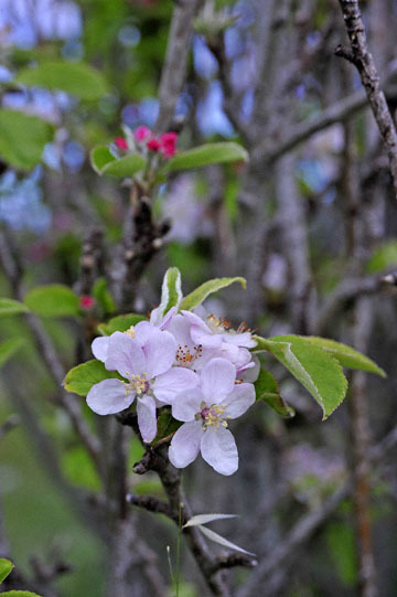 blog 30 Mendocino, Downtown Hiking Trail, Apple, CA_DSC6805-4.16.16.(2).jpg