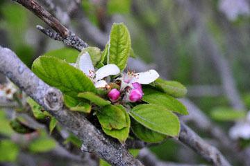 blog 30 Mendocino, Downtown Hiking Trail, Apple, CA_DSC6803-4.16.16.(2).jpg