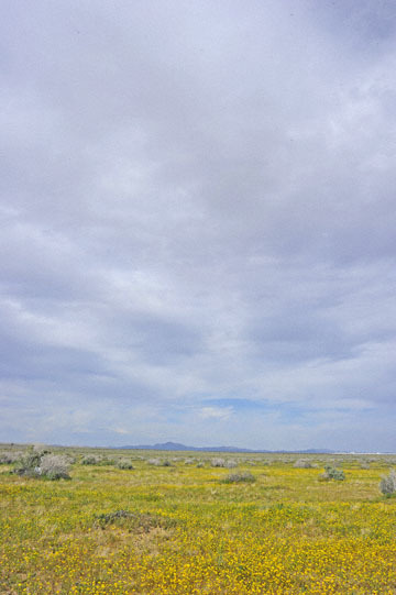 blog 11 Mojave Desert, CA|58W near Mojave, Goldfields_DSC6924-3.19.17.(2).jpg