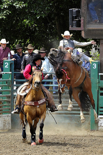 blog (4x6@300) Yoko 87 Rowell Ranch Rodeo, Saddle Bronco 16, Ryder Wright (64
