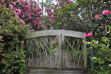blog 32 Fort Bragg Garden, Gate to the Woods, CA_DSC6914-4.19.16.jpg