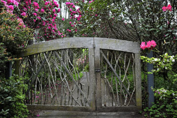 blog 32 Fort Bragg Garden, Gate to the Woods, CA_DSC6912-4.19.16.jpg