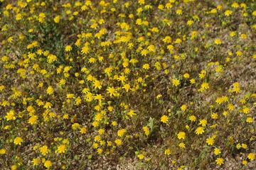 blog 11 Mojave Desert, CA|58W near Mojave, Goldfields_DSC6932-3.19.17.(2).jpg