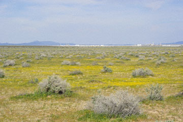 blog 11 Mojave Desert, CA|58W near Mojave, Goldfields_DSC6941-3.19.17.(2).jpg