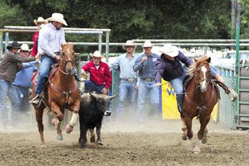 blog 84 Rowell Ranch Rodeo, Steer Wrestling 5, Justin Resseman (NT)_DSC9886-5.21.16.(2).jpg