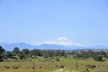 blog 42 Auburn to Weeds on 5N, Red Bluff 134E, Mt. Lassen, CA_DSC9955-4.25.16.(1).jpg