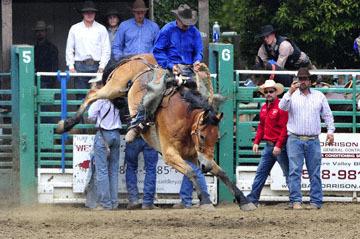blog 85 Rowell Ranch Rodeo, Ranch Saddle Bronco 2, Chris Vizio (NT) 2_DSC9980-5.21.16.(3).jpg