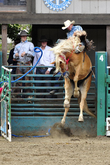 blog 85 Rowell Ranch Rodeo, Saddle Bronco 2, Andrew Steiger (NS