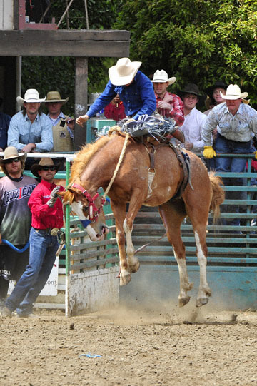 blog 86 Rowell Ranch Rodeo, Saddle Bronco 6, Ethan Lemmons (71