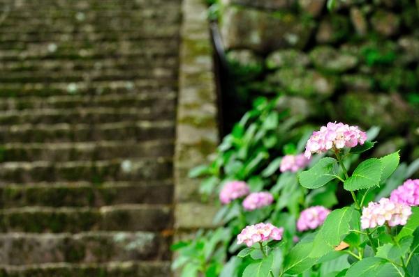 6紫陽花14.06.22