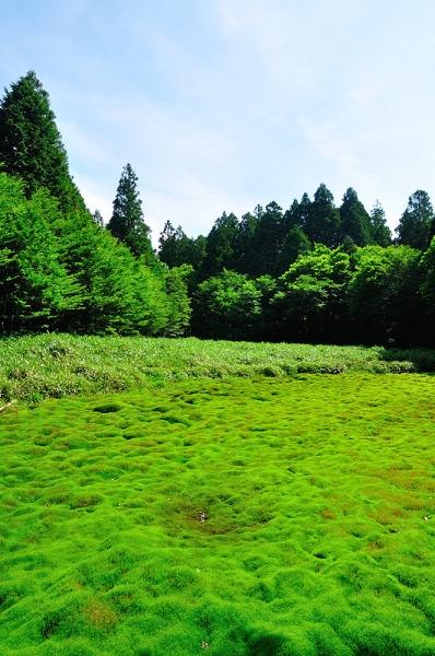 5笹倉湿原17.07.15