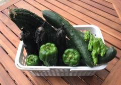 家庭菜園・収穫物