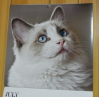 calendar170721