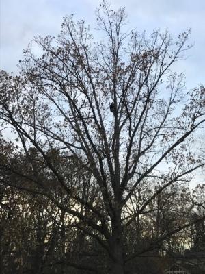 treegottrimmed2017.jpg