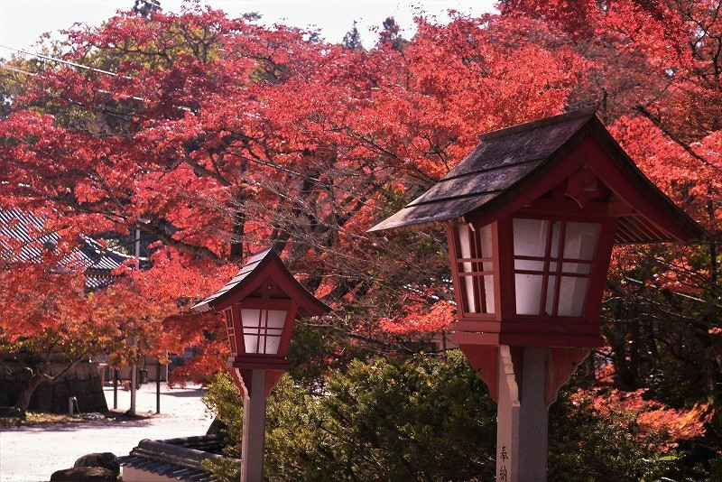 龍泉寺 の紅葉4