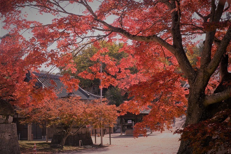 龍泉寺 の紅葉5