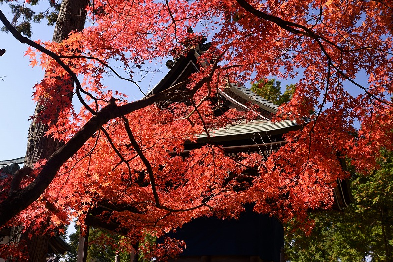 龍泉寺 の紅葉6