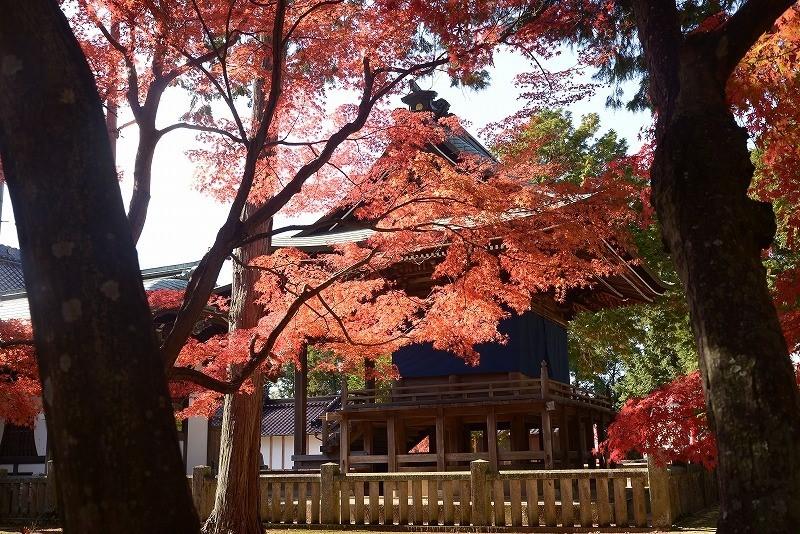 龍泉寺 の紅葉8