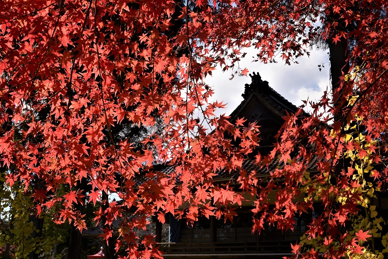 龍泉寺 の紅葉9