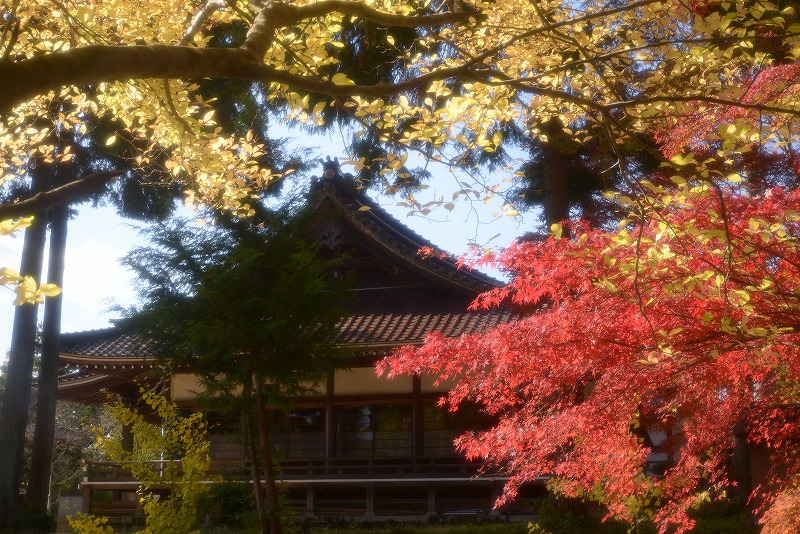 龍泉寺 の紅葉10