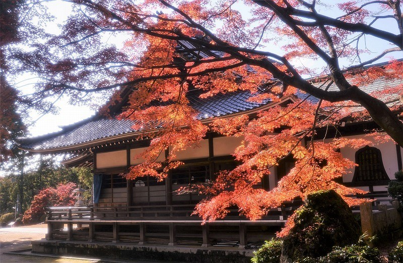龍泉寺 の紅葉11