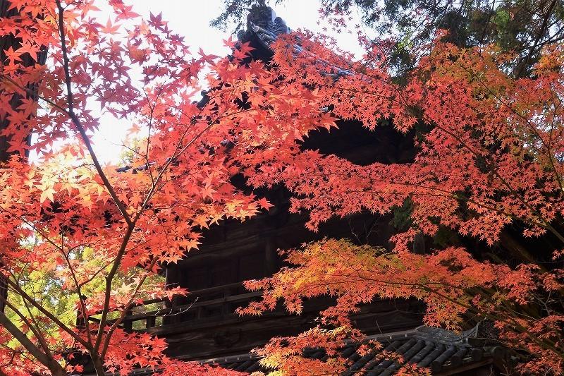 曹源寺の紅葉4