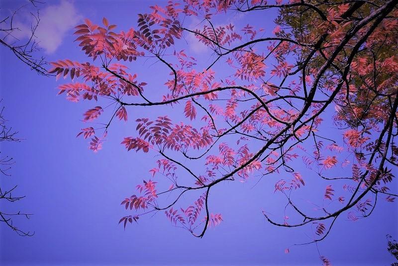 後楽園の紅葉30