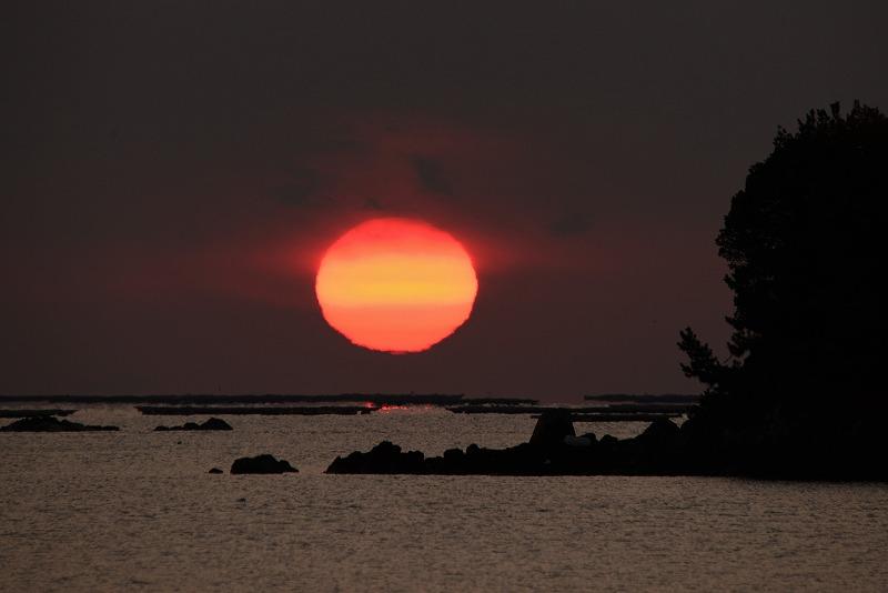 達磨太陽11