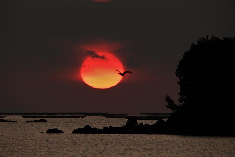 達磨太陽12