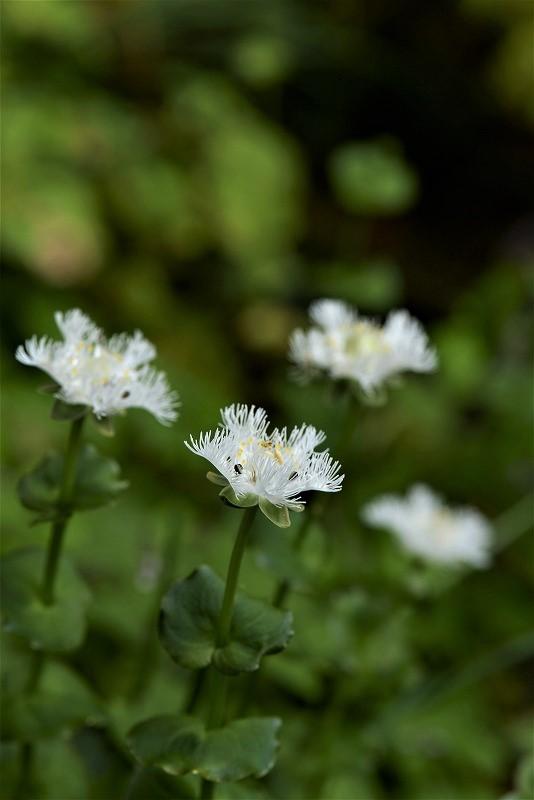 シラヒゲ草8t