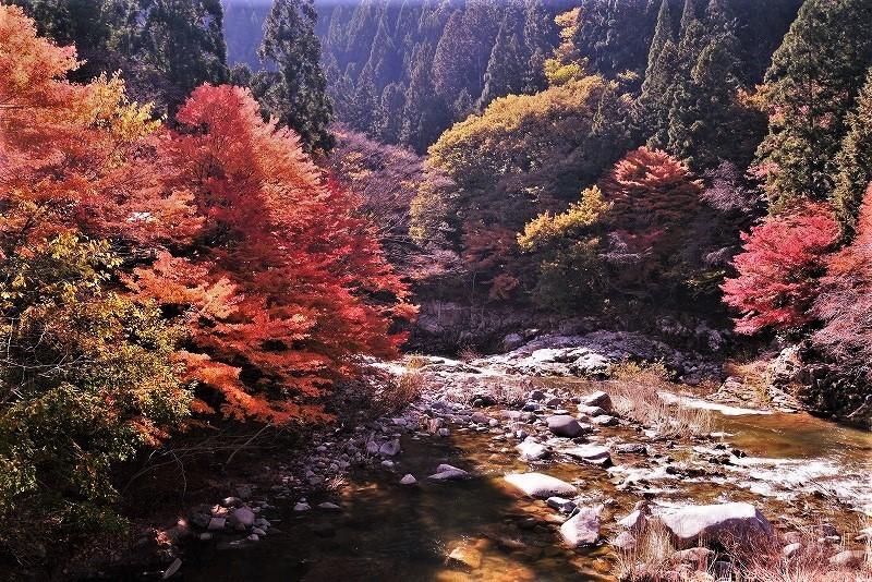 奥津渓の紅葉1