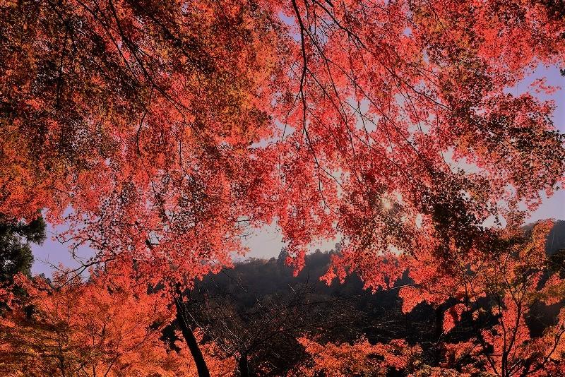 奥津渓の紅葉7