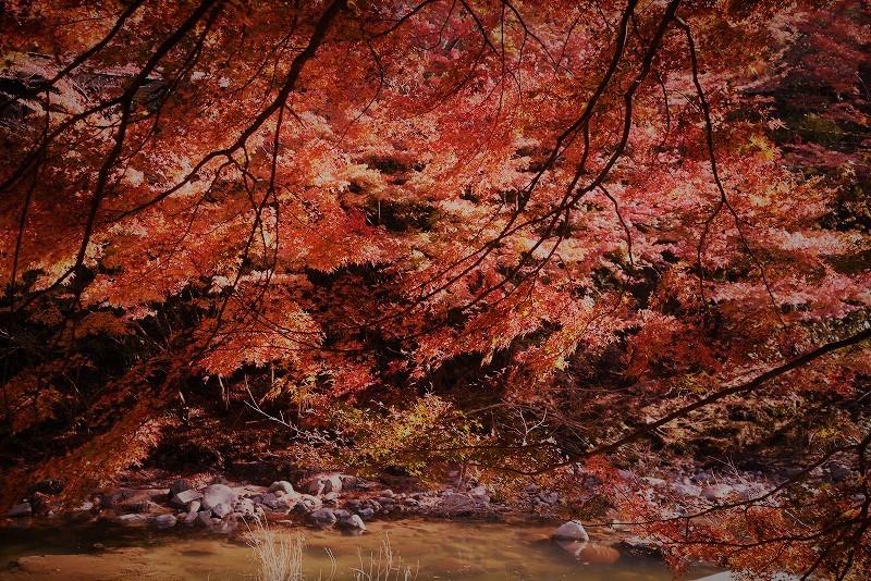 奥津渓の紅葉27