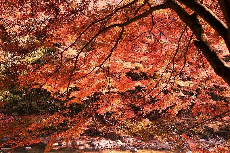 奥津渓の紅葉29