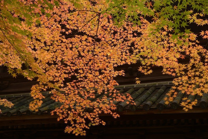 曹源寺の紅葉8
