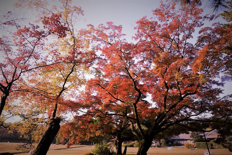 後楽園の紅葉1