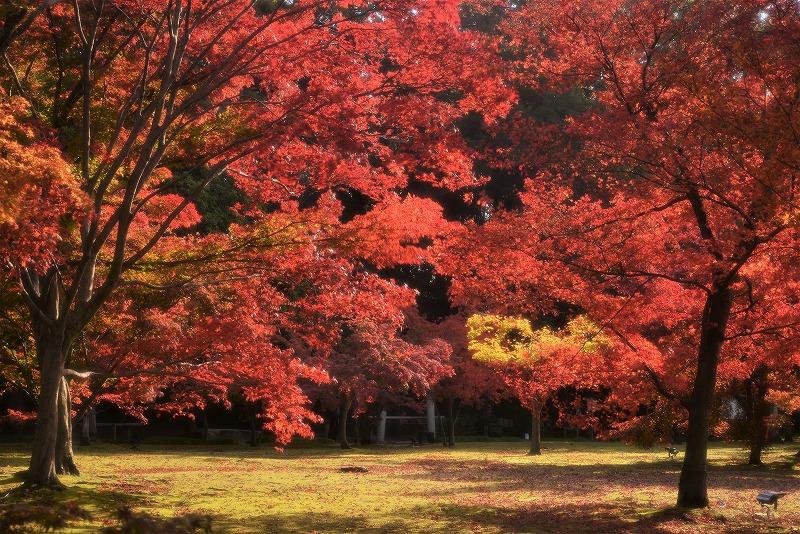 後楽園の紅葉22