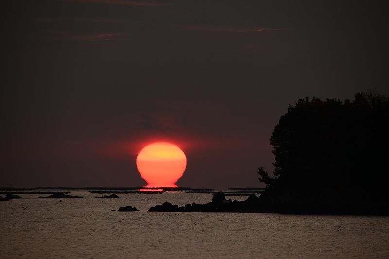 達磨太陽6