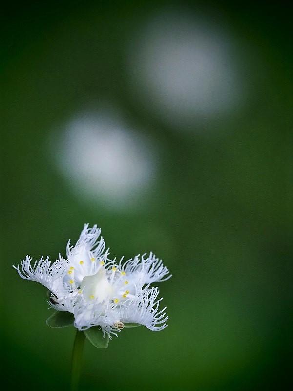 シラヒゲ草3t