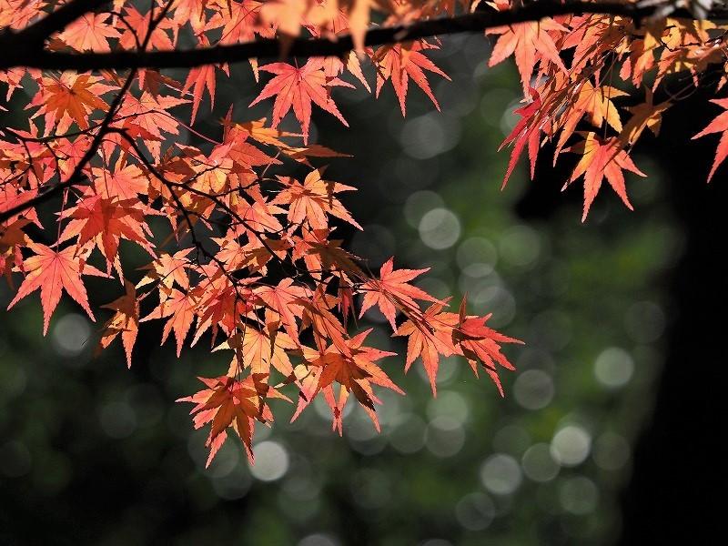 奥津渓の紅葉15