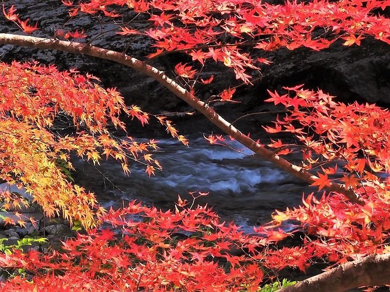 奥津渓の紅葉12