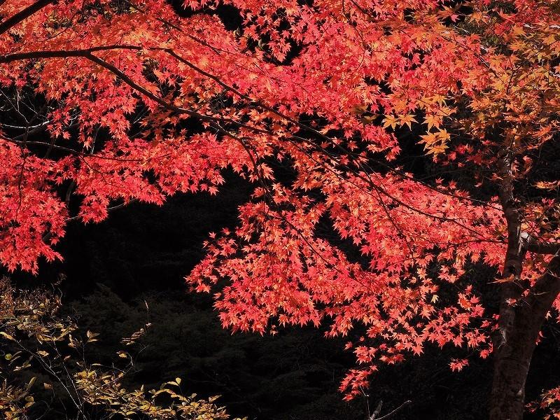 奥津渓の紅葉13