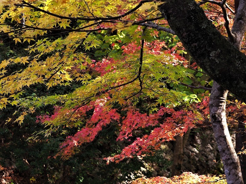 奥津渓の紅葉20