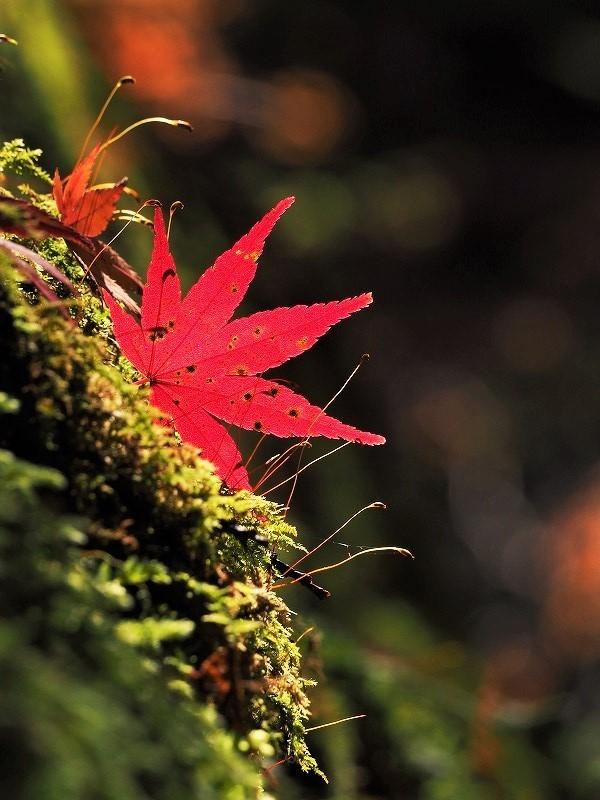 奥津渓の紅葉22