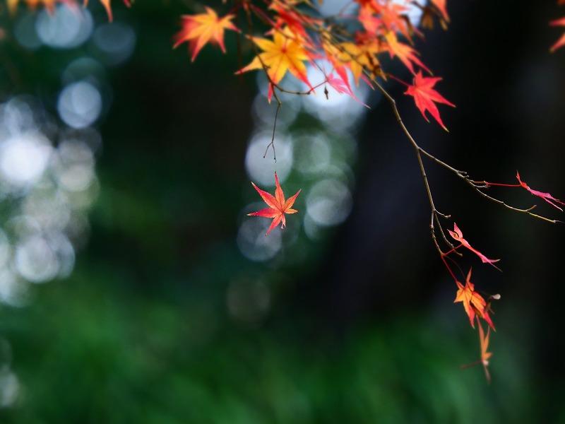 後楽園の紅葉10